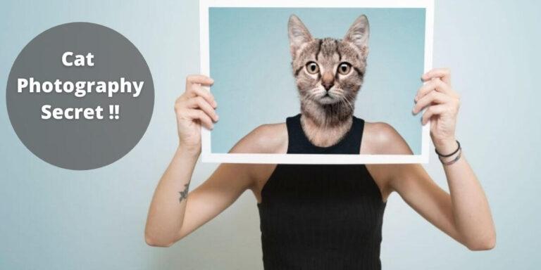 The Secret Techniques to Improve Cat Photography
